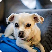 Adopt A Pet :: Booyah - Salt Lake City, UT
