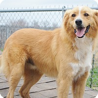 Adopt A Pet :: Milo - Iola, TX