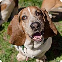 Adopt A Pet :: Mater - Salt Lake City, UT
