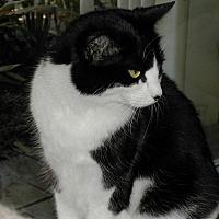 Adopt A Pet :: Sadie - Bonita Springs, FL