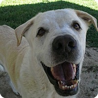 Adopt A Pet :: JAKE FROM STATE FARM - Odessa, FL