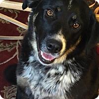Adopt A Pet :: Brizzy - Omaha, NE