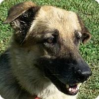 Adopt A Pet :: Sally - Lexington, KY