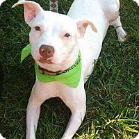 Adopt A Pet :: Adirah - Dayton, OH