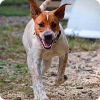 Adopt A Pet :: Hazel - Breinigsville, PA