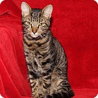 Adopt A Pet :: Clyde - Marietta, OH