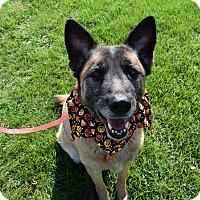 Adopt A Pet :: Duchess - Washington, PA