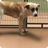 Adopt A Pet :: Trista 3530 - Columbus, GA
