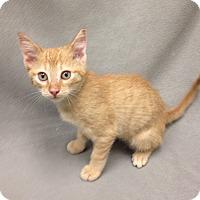 Adopt A Pet :: Mac - Watauga, TX