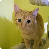 Adopt A Pet :: Marigold - Greeley, CO