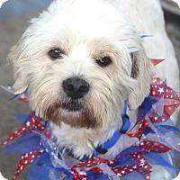 Adopt A Pet :: Chase - Norwalk, CT
