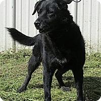 Adopt A Pet :: Babe - Greeley, CO