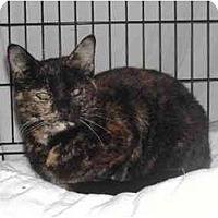 Adopt A Pet :: Sweet petite Missy - cincinnati, OH