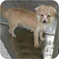 Adopt A Pet :: Gino - Homestead, FL