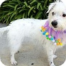 Adopt A Pet :: Dottie