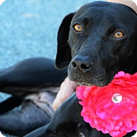 Adopt A Pet :: Lorna Doone - Rockaway, NJ