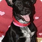 Adopt A Pet :: Sophia