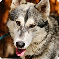 Adopt A Pet :: Kenai - Pt. Richmond, CA