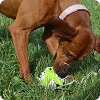 Adopt A Pet :: Sadie - Bakersville, NC