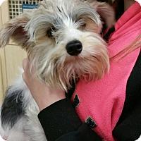 Adopt A Pet :: Trapper - Ogden, UT
