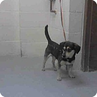 Adopt A Pet :: BARNEY - Conroe, TX