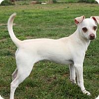 Adopt A Pet :: Cooper - Salem, NH