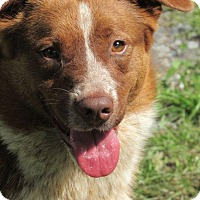 Adopt A Pet :: Tanner - Aurora, CO
