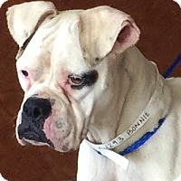 Adopt A Pet :: Bonnie - Oswego, IL
