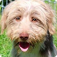 Adopt A Pet :: BARKLEY(OUR