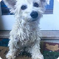 Adopt A Pet :: Sara - Los Angeles, CA