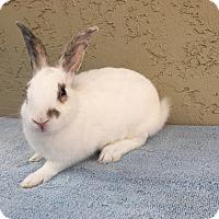 Adopt A Pet :: Riley - Bonita, CA