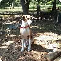 Adopt A Pet :: Frankie - Russellville, KY