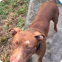 Adopt A Pet :: Jayna (courtesy listing) - Homestead, FL