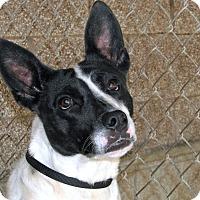 Adopt A Pet :: Peanut - Ruidoso, NM