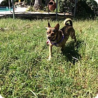 Adopt A Pet :: Tuco - Hamilton, ON