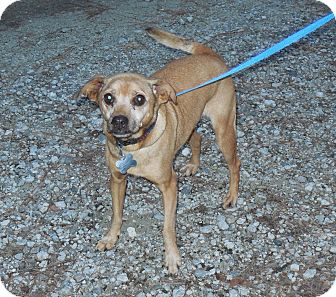 Chihuahua Mix Dog for adoption in Burgaw, North Carolina - Missy