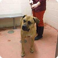 Adopt A Pet :: MAISY - Rockford, IL