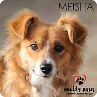 Adopt A Pet :: Meisha - Council Bluffs, IA