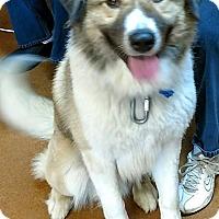 Adopt A Pet :: Max - Coming Soon! - Ascutney, VT