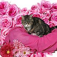 Adopt A Pet :: Polly - Chesapeake, VA