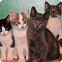 Adopt A Pet :: foster babies - Duncan, BC