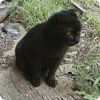 Adopt A Pet :: Ezekiel - Acme, PA