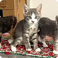Adopt A Pet :: Mary Ann, Wanda & Earl - Winter Haven, FL