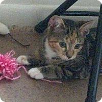 Adopt A Pet :: Ziva - Bear, DE