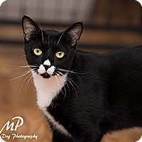 Adopt A Pet :: Cate - Fountain Hills, AZ