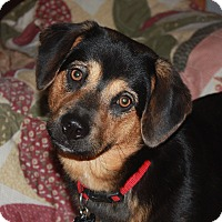 Adopt A Pet :: Missy - Marion, AR