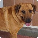 Adopt A Pet :: 'CHAMP'