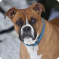 Adopt A Pet :: Baby Boy - Sunderland, MA