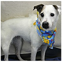 Adopt A Pet :: Sparkle - Forked River, NJ