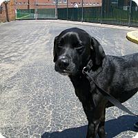 Adopt A Pet :: Buddy - Lancaster, OH